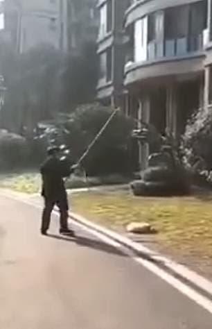 Des policiers tuent des chiens en pleine rue