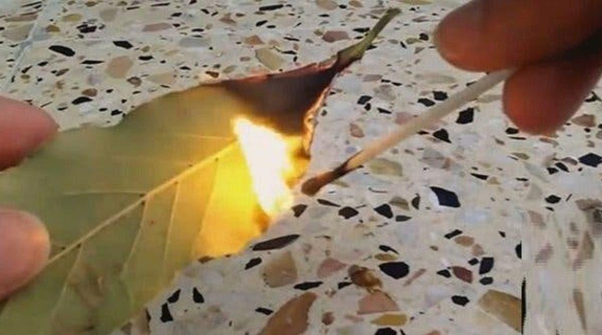 Elle brule des feuilles de laurier dans sa maison