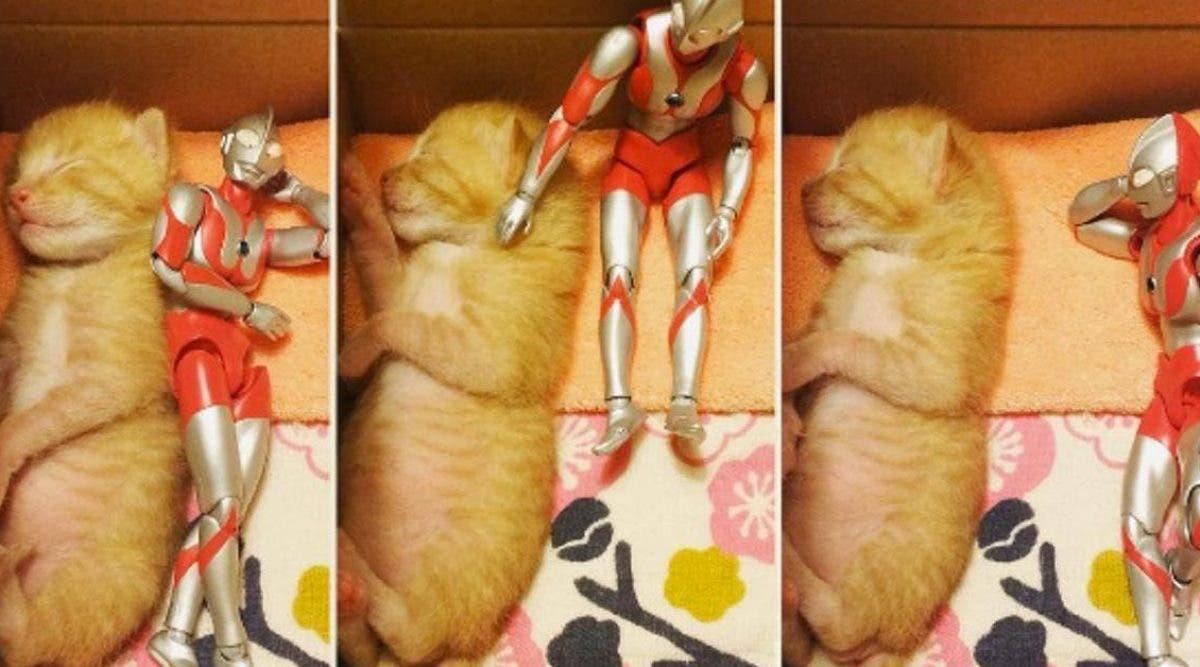 Il met cet objet à côté de son chaton mourant. Ce qui se passe après est génial !