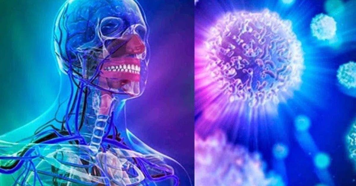 régénérer complètement le système immunitaire