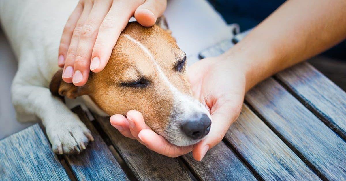 Job de reve Caresser des chiens pour 90 euros par heure
