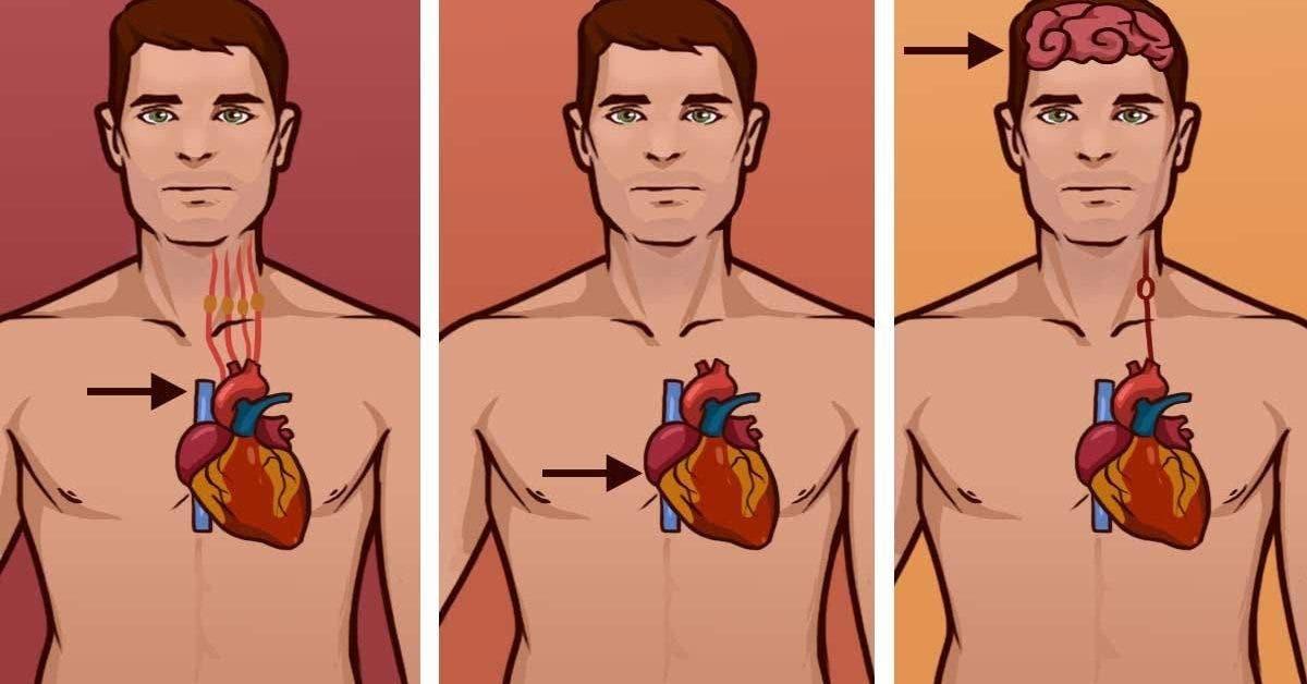 La différence surprenante entre crise cardiaque et arrêt cardiaque qui vous aidera à sauver une vie