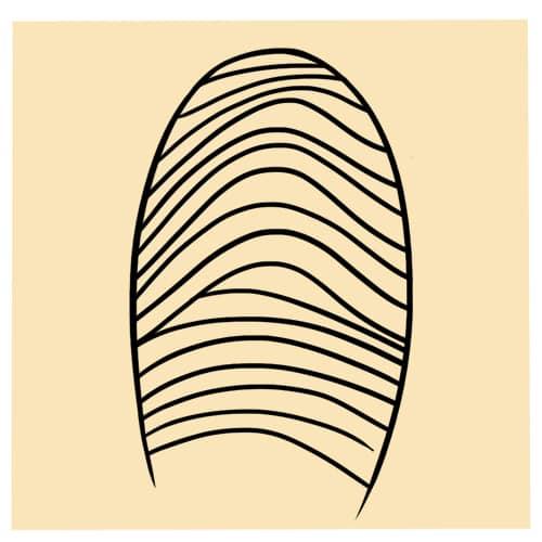 La forme de vos empreintes digitales