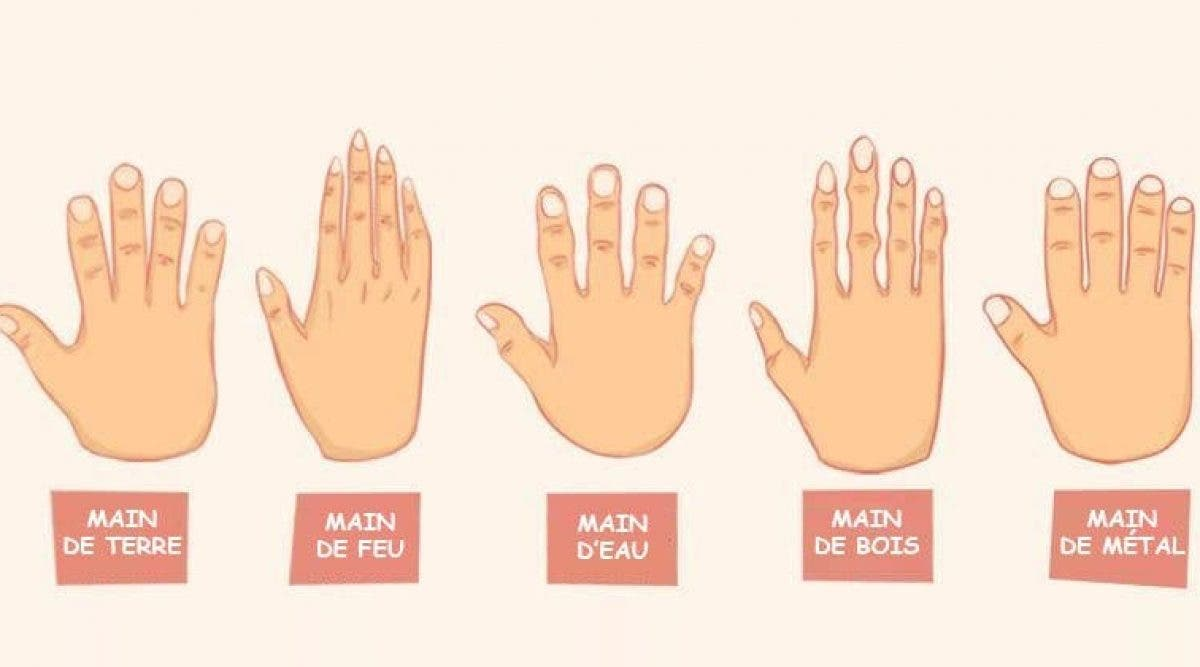 La forme de vos mains révèle des secrets sur vous