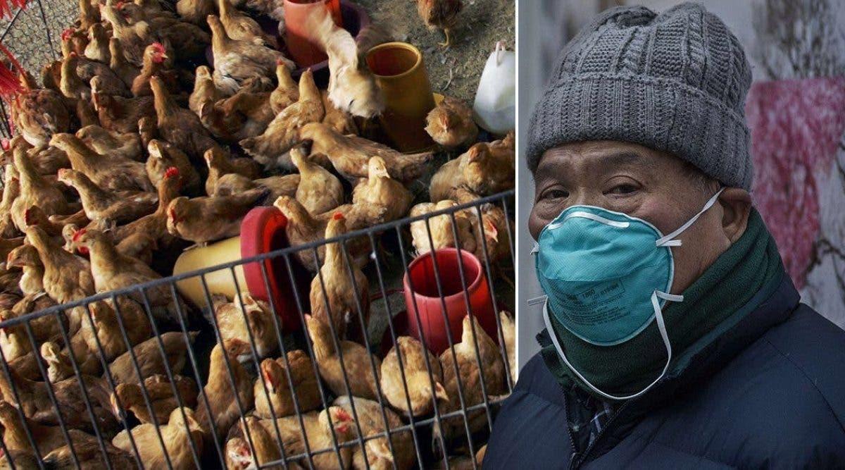 La grippe aviaire se répand dans les provinces chinoises