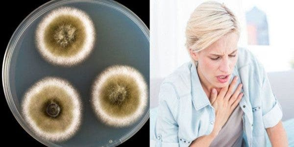 La maladie des moisissures se répand partout