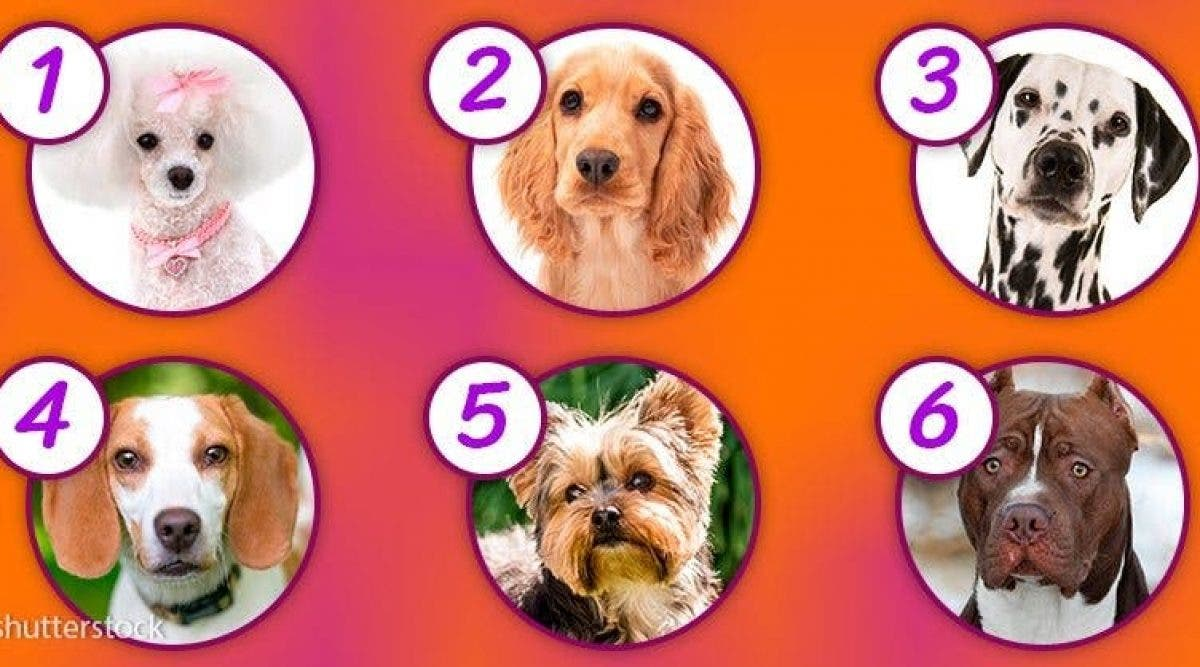La race de votre chien revele votre vraie personnalité
