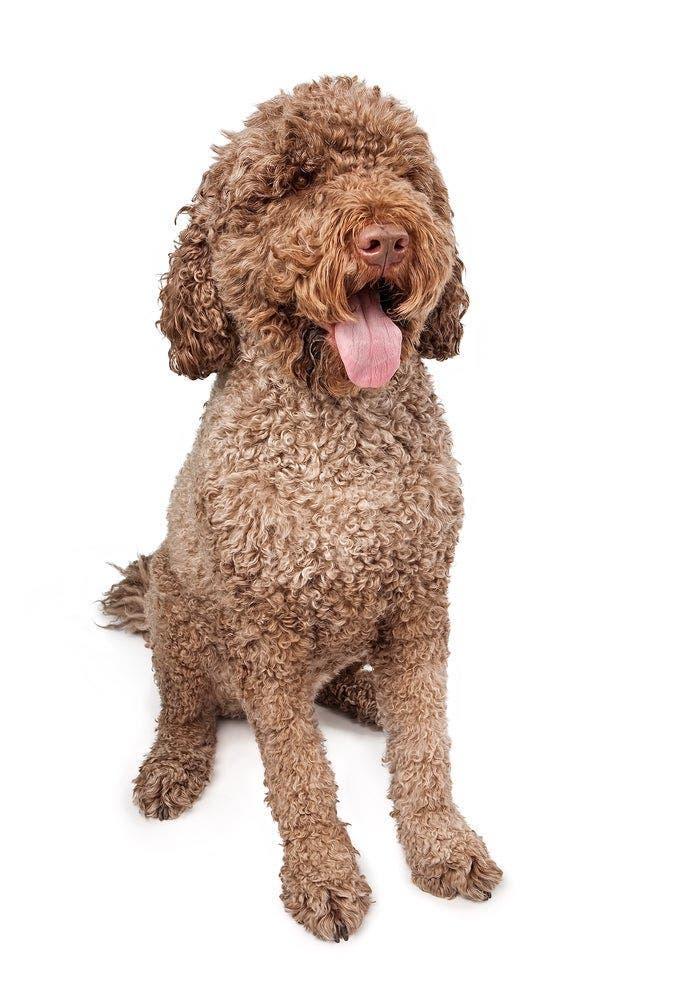 La race de votre chien révèle votre vraie personnalité