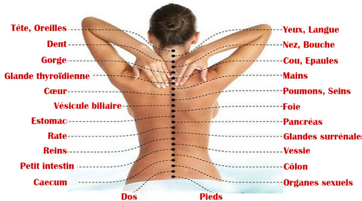La colonne vertébral est connecté à tous les organes et chaque douleur pourrait signifier un problème de santé