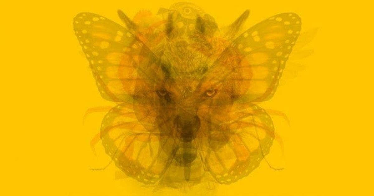 L'animal que vous voyez en premier sur l'image