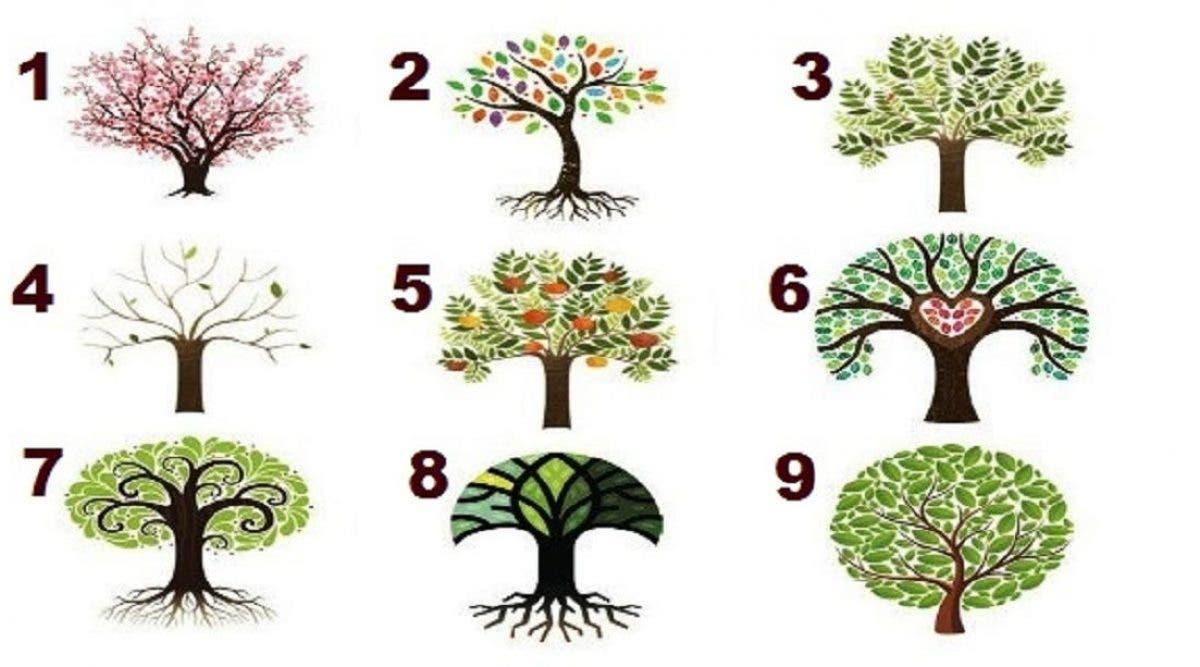 L'arbre que votre choix révèle votre personnalité