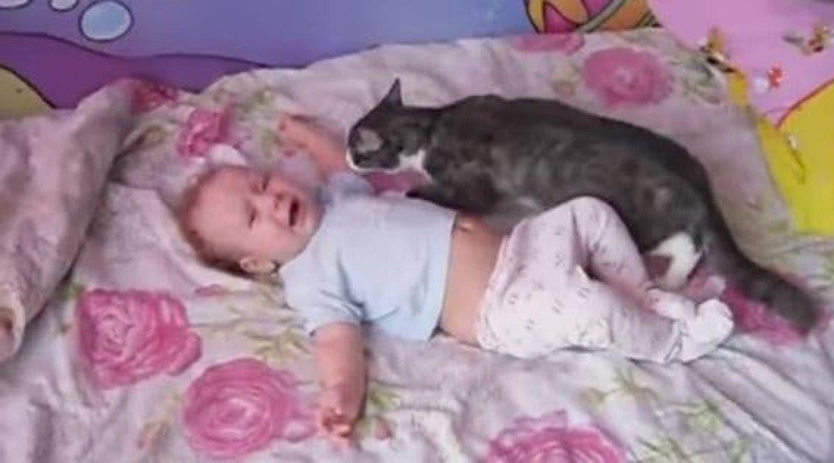 Le bébé commence à pleurer au lit d'une manière hystérique. Regardez la réaction rapide du chat