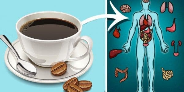 Le café présente de nombreux bienfaits pour votre santé. Vous serez surpris de connaitre toutes ses vertus. Pur ou décaféiné, ses vertus sont nombreuses.