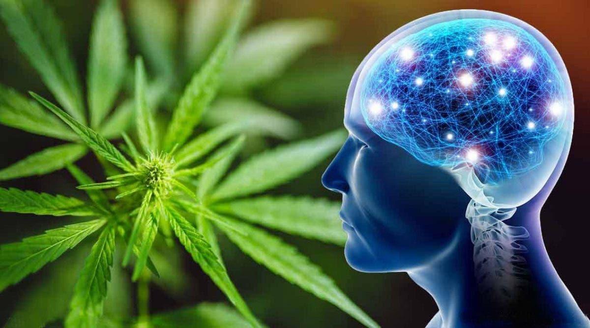 Le cannabis peut aider à régénérer le cerveau