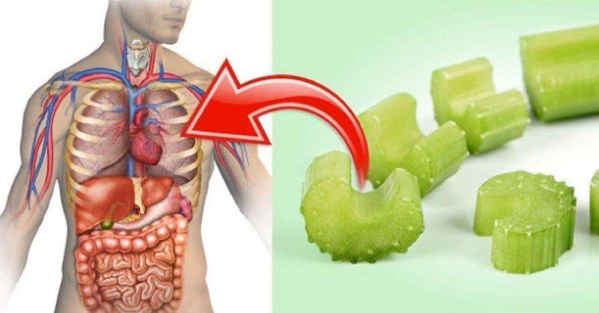Le celeri est un medicament naturel qui fait perdre du poids
