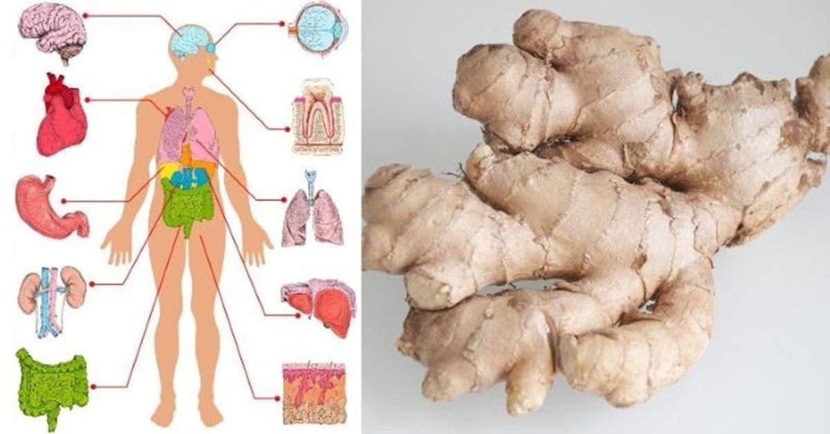 Le gingembre est un médicament naturel