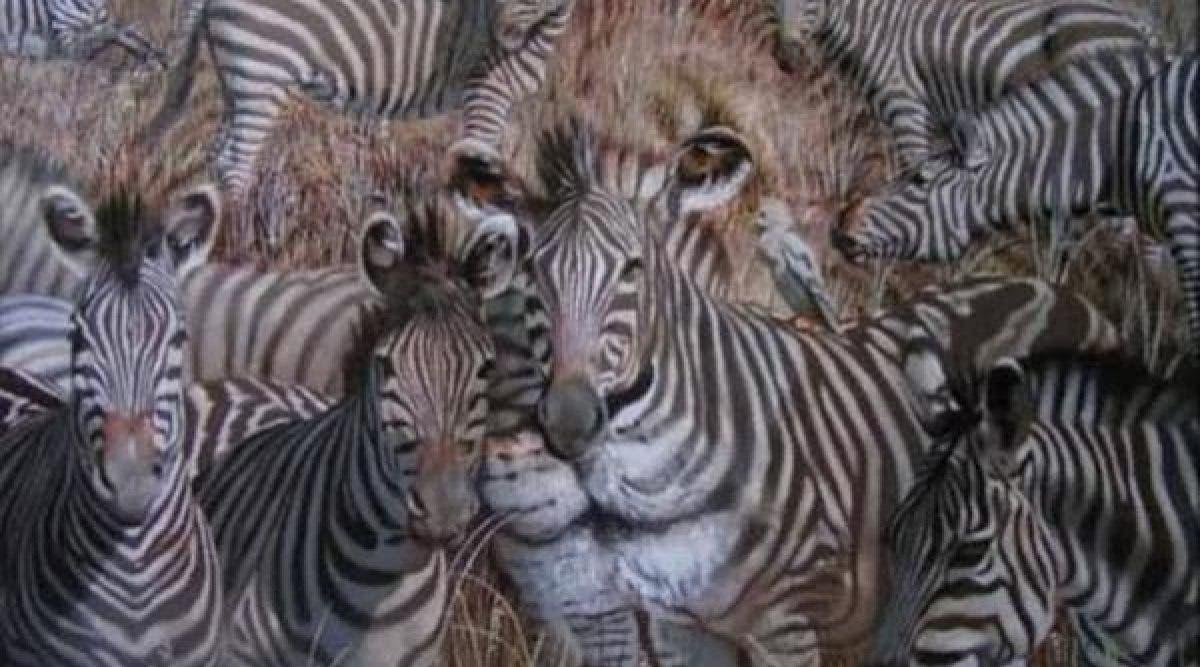 Le premier animal que vous voyez sur l'image révèle un secret sur votre personnalité