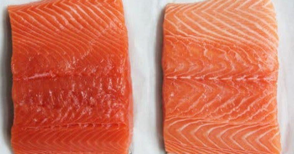 Le saumon delevage 1