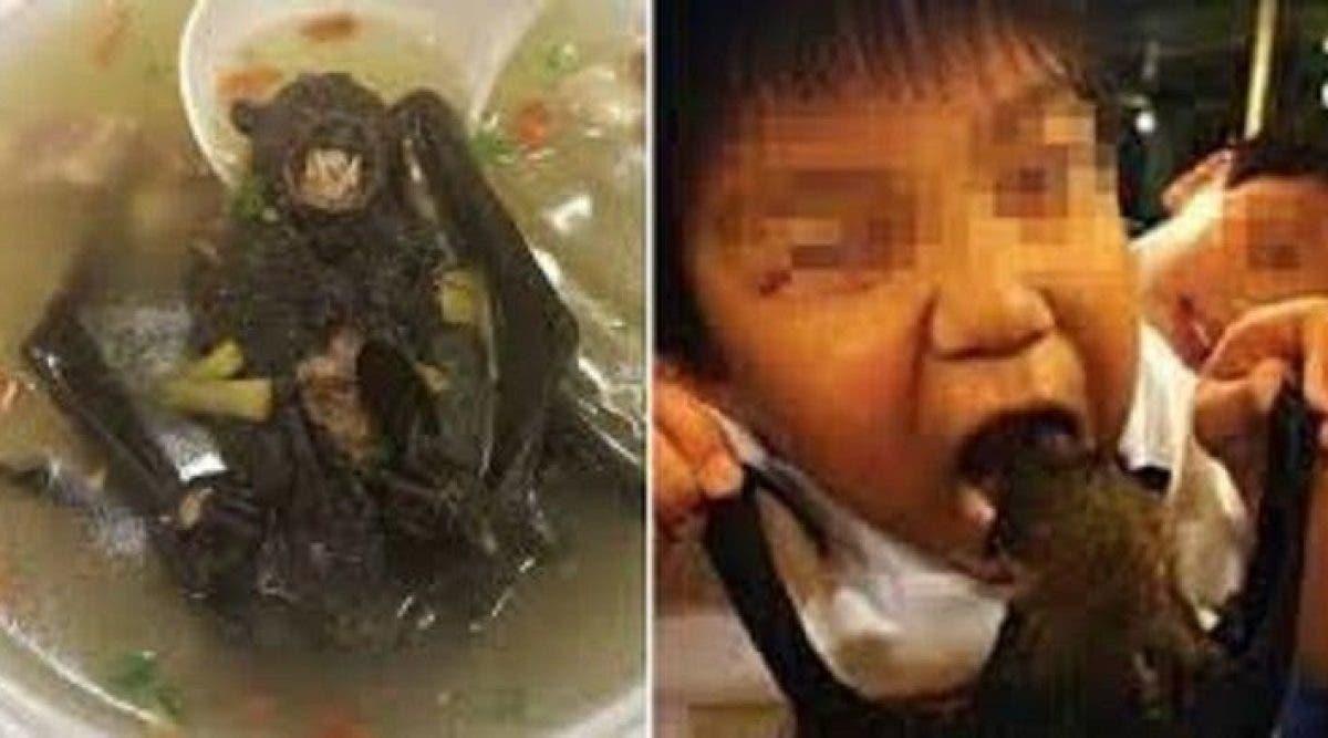 Le virus tueur pourrait avoir comme origine la soupe de chauve-souris toujours consommée en Chine
