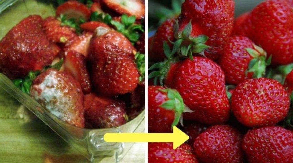 Les agriculteurs révèlent l'astuce qui permet de conserver les fraises très longtemps