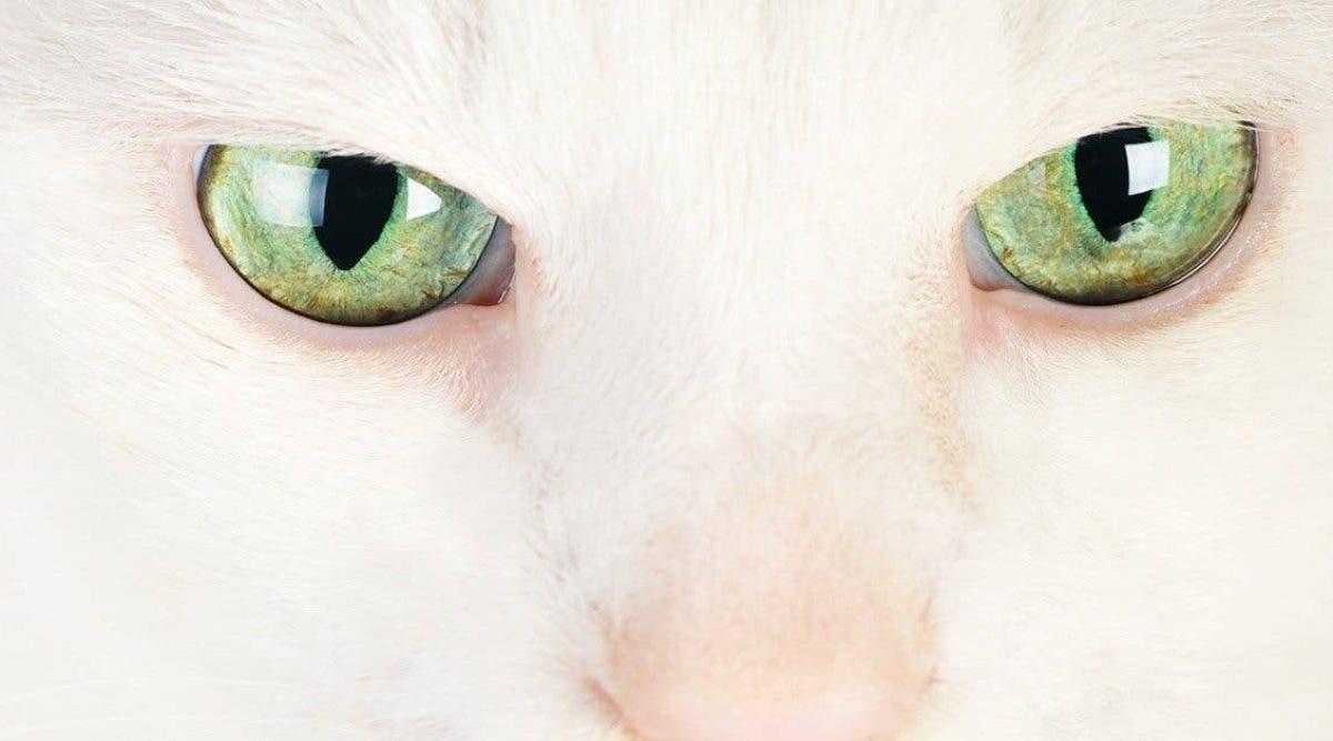 Les chats protègent votre maison des esprits et des démons maléfiques