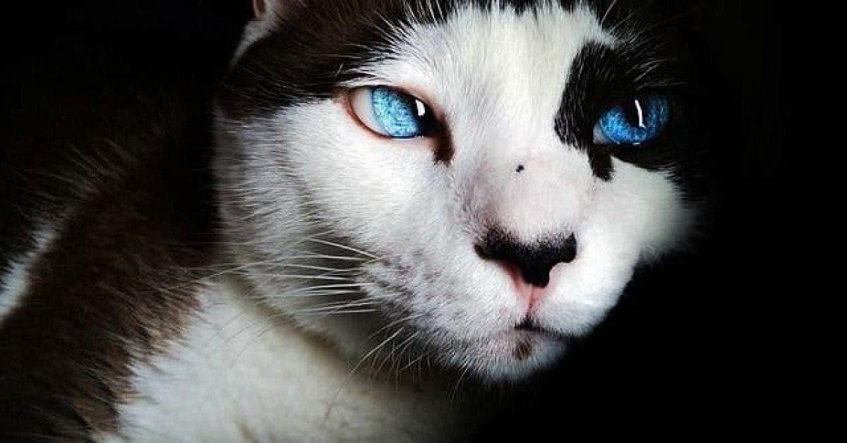 Les chats protegent votre maison des esprits negatifs et des fantomes 1