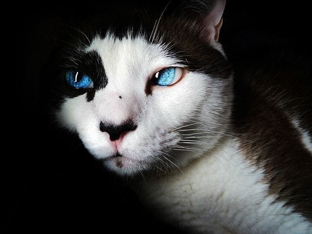 Les chats protègent votre maison des esprits négatifs et des fantômes