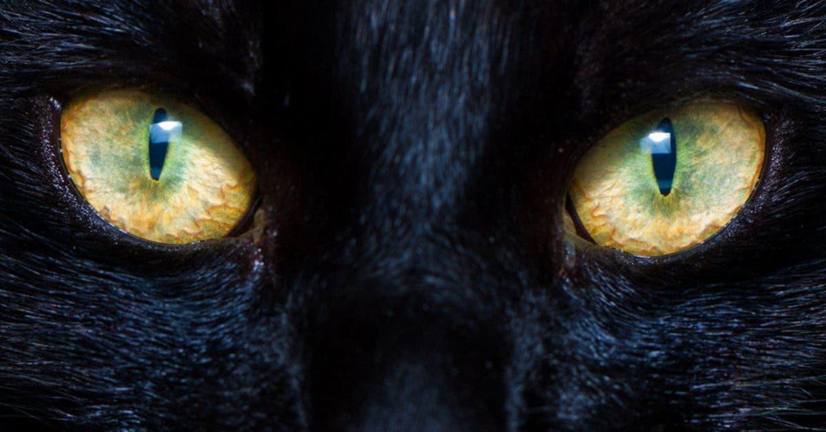 Les chats sont capables de vous proteger ainsi que votre maison des esprits malefiques 1