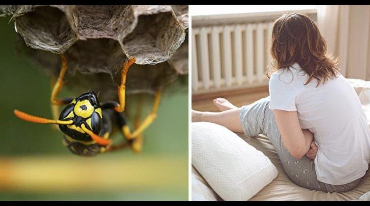 Les gynécologues avertissent les femmes pour ne plus mettre de nids de guêpes