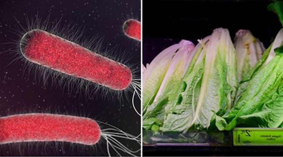 Les laitues romaines provenant des états-unis seraient contaminées par la bacterie E.coli