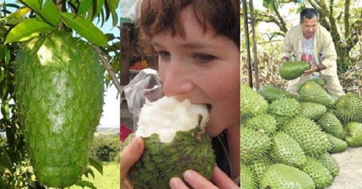 Lindustrie pharmaceutique cache ce fruit au grand public car il combat le cancer 1