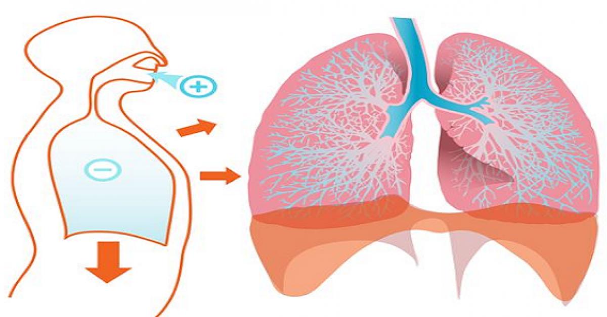 Ces aliments nettoient vos poumons en profondeur