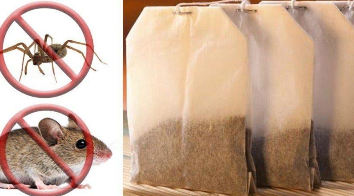 Ma grand-mère utilise un sachet de thé pour éloigner les araignées