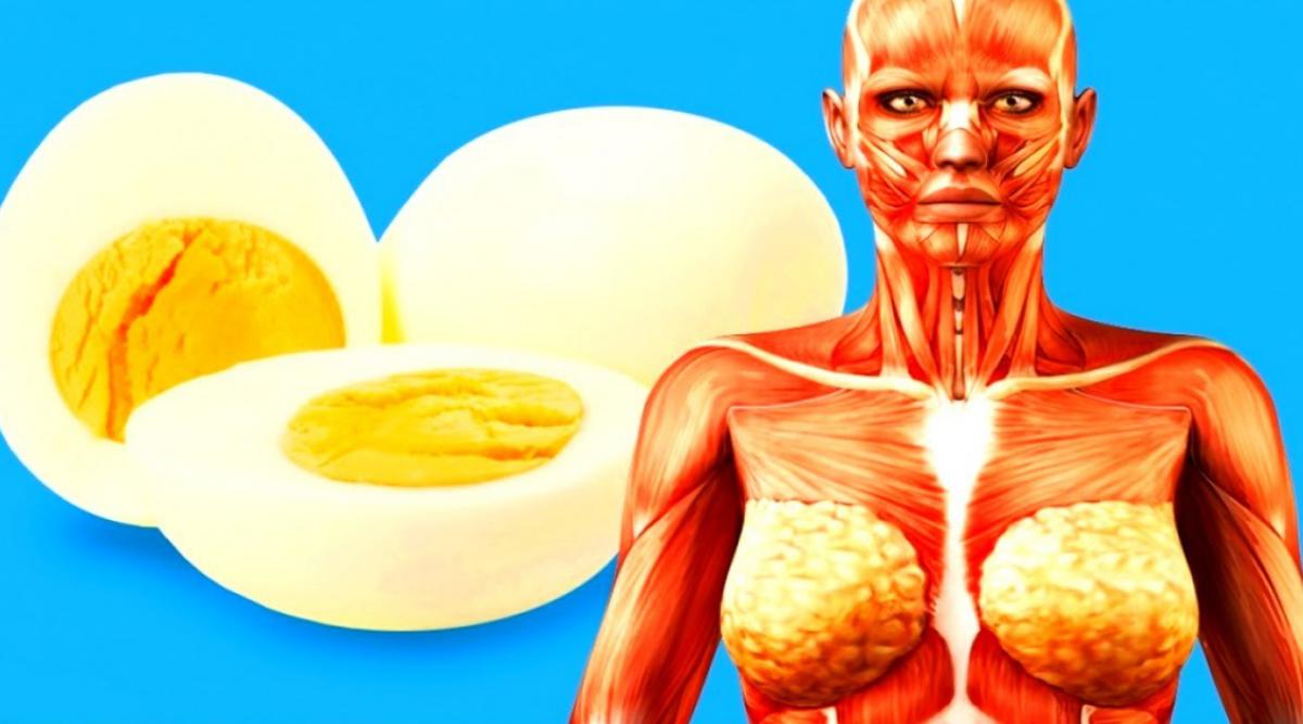 Manger un œuf par jour protège votre cœur