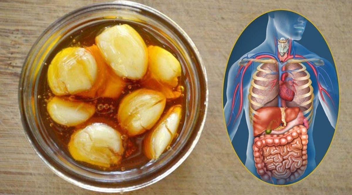 Mangez de l'ail et du miel sur un estomac vide pendant 7 jours et regardez ce qui arrive à votre santé