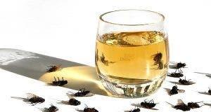 Mettez ceci dans votre maison et il n'y aura plus de mouches, de cafards ou de moustiques en 1 heure seulement !