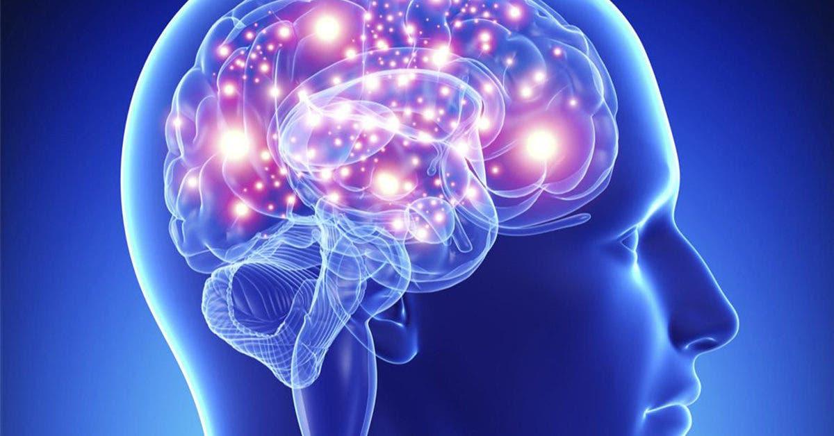Neurocysticercose : la maladie des vers dans le cerveau