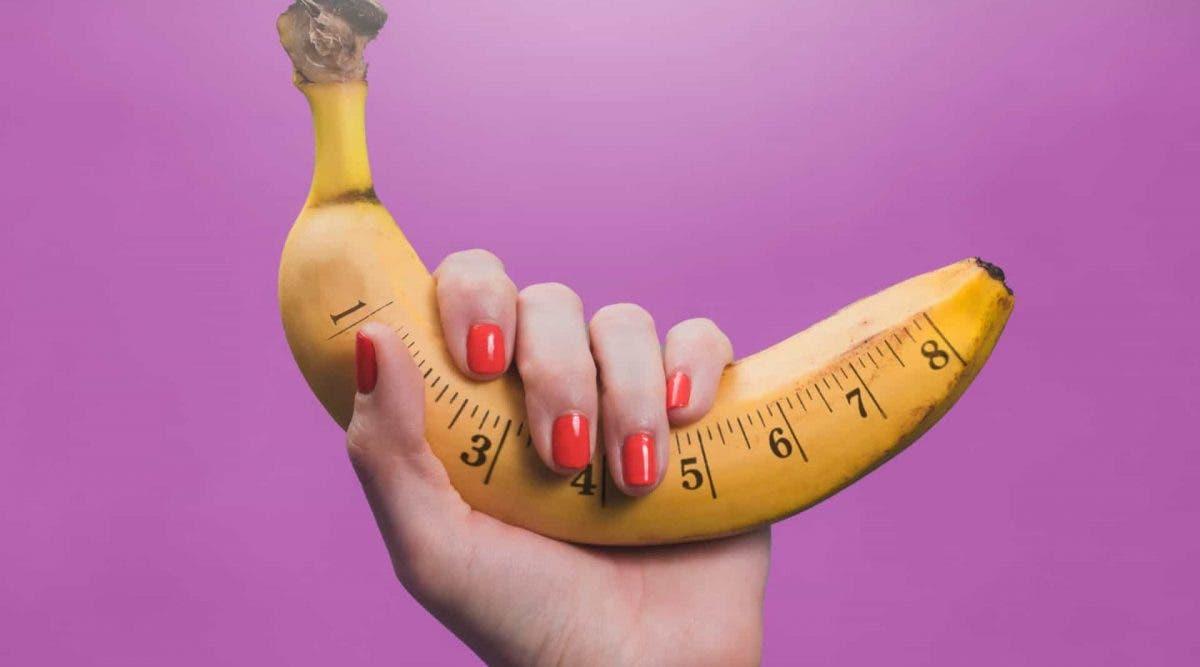 forme pénis