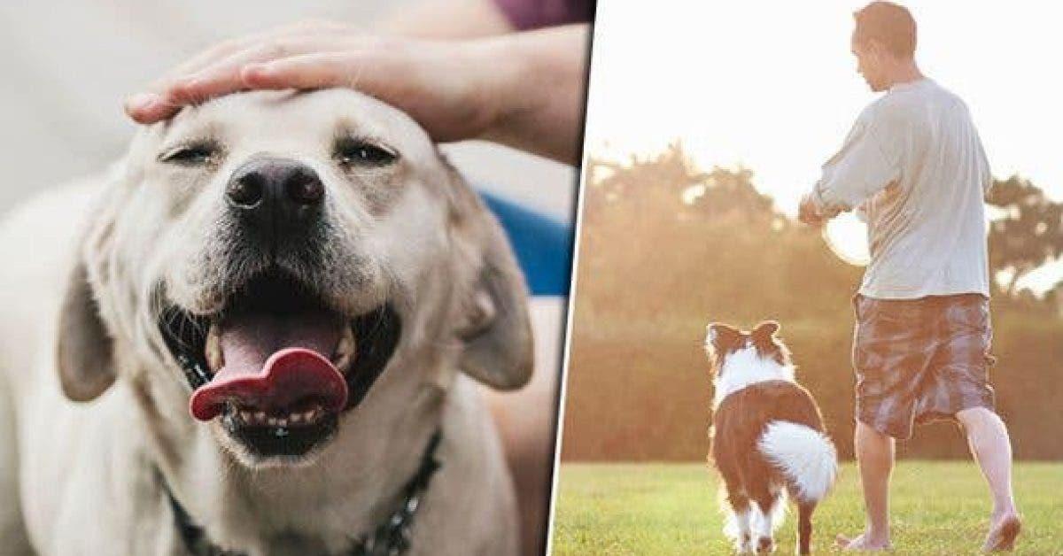 Posséder un chien vous permet de vivre plus longtemps d'après les scientifiques