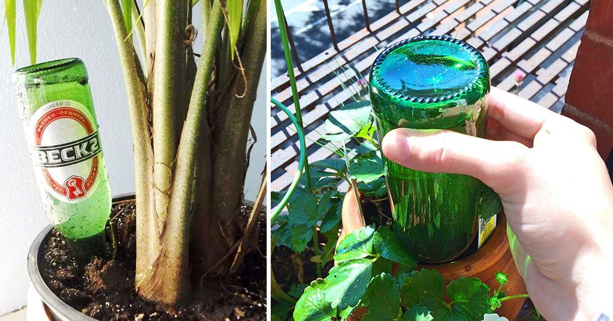 Pourquoi est-il important de planter une bouteille dans vos pots de fleurs ?