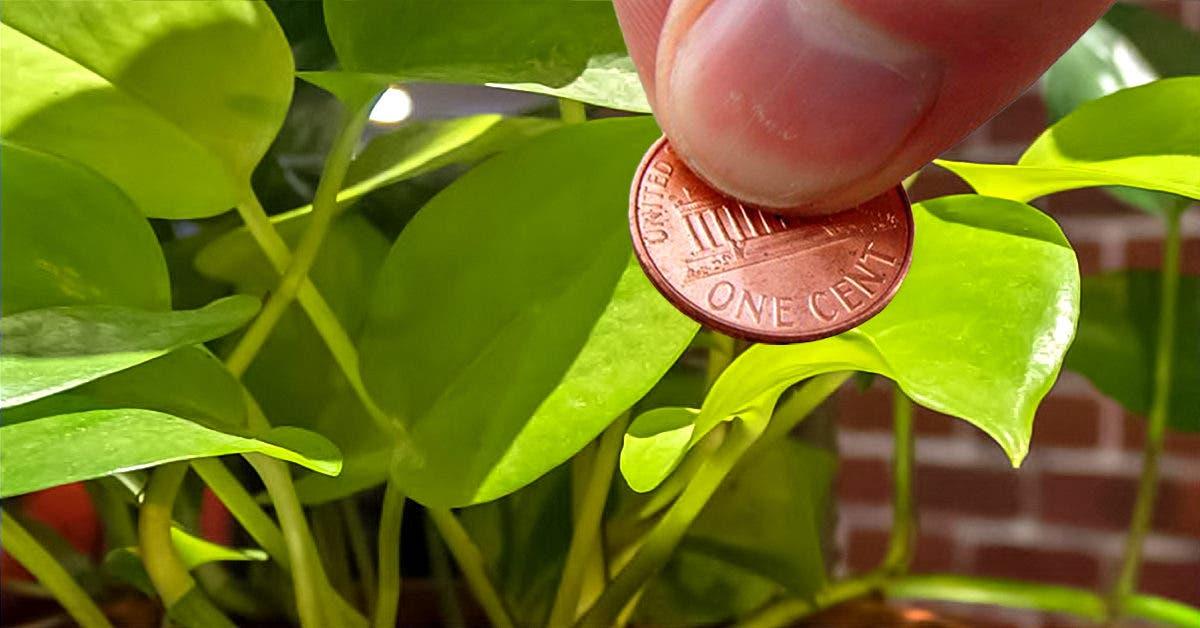 9 astuces pour éloigner les insectes de vos plantes et améliorer leur croissance