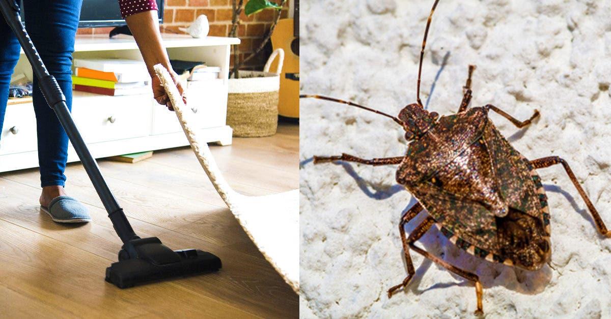 Punaises puantes : 4 signes d'avertissement d'une infestation à la maison