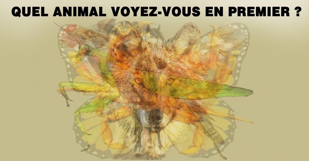 Quel animal voyez vous en premier