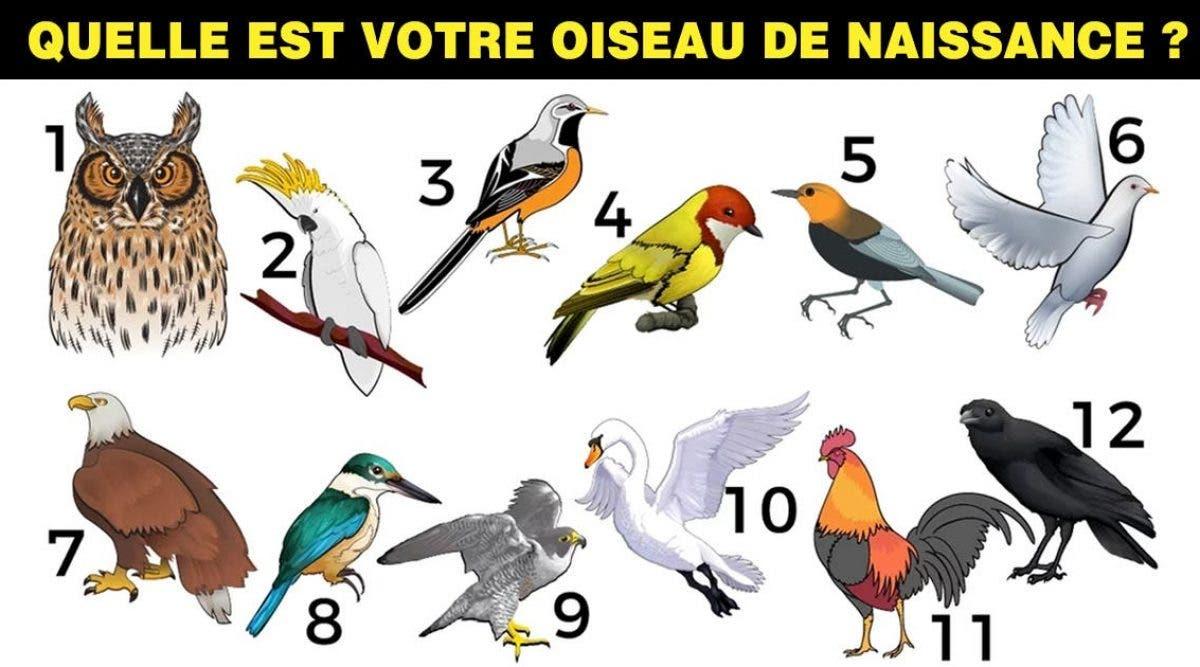 L'oiseau de votre mois de naissance décrit votre véritable personnalité