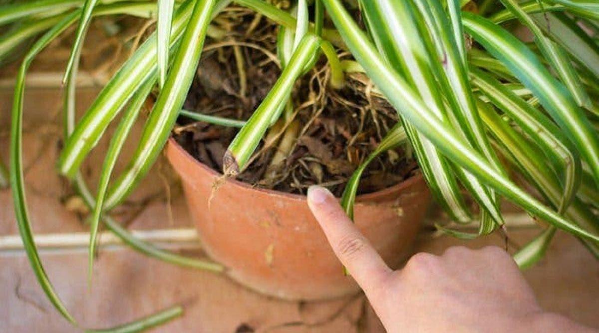 plantes dans votre maison