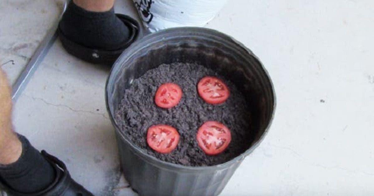 Mettez 4 rondelles de tomate dans un pot et observez ce qui va se passer en 10 jours. C'est incroyable !