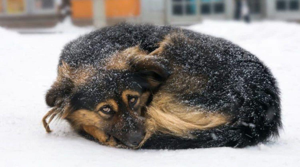 USA : Une loi interdit de laisser ses animaux dehors dans