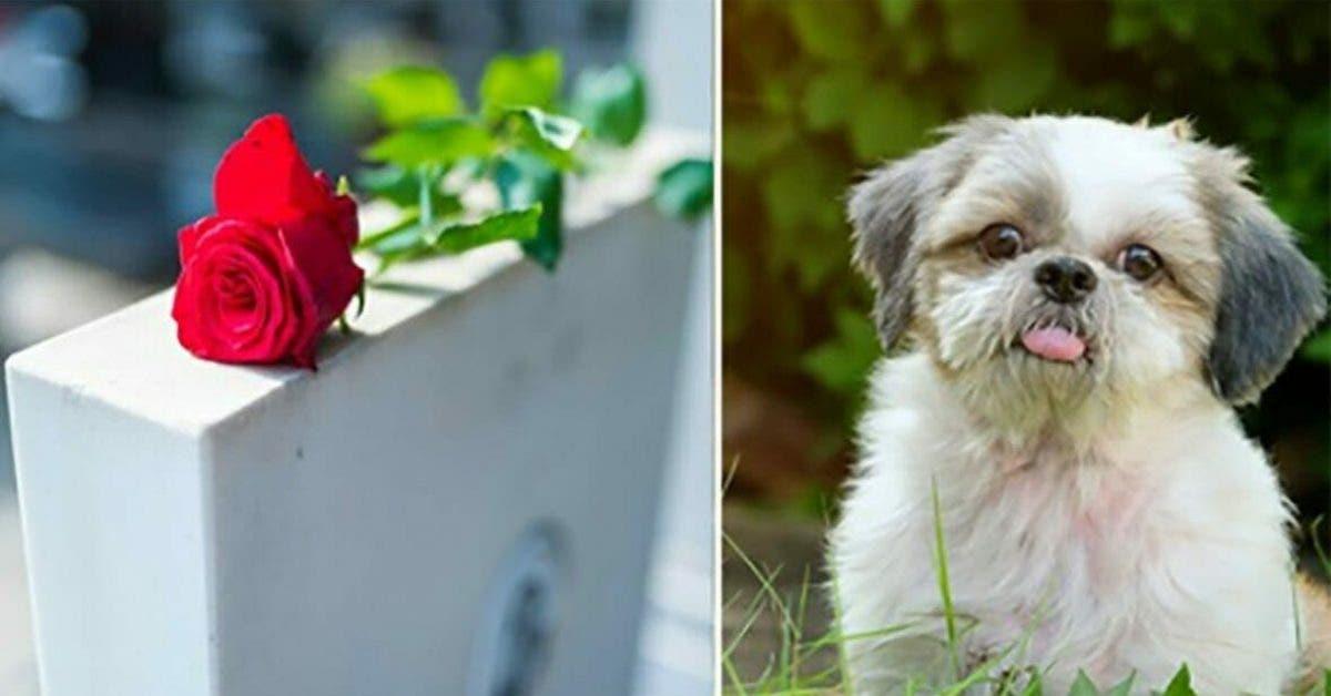 Un chien en bonne santé va être tué pour être enterré auprès de son maître