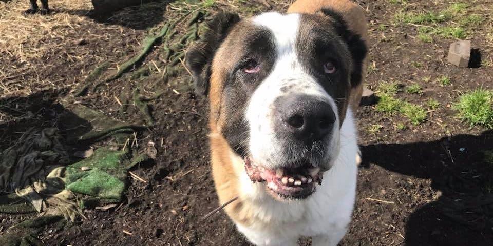 Un chien meurt d'une crise cardiaque