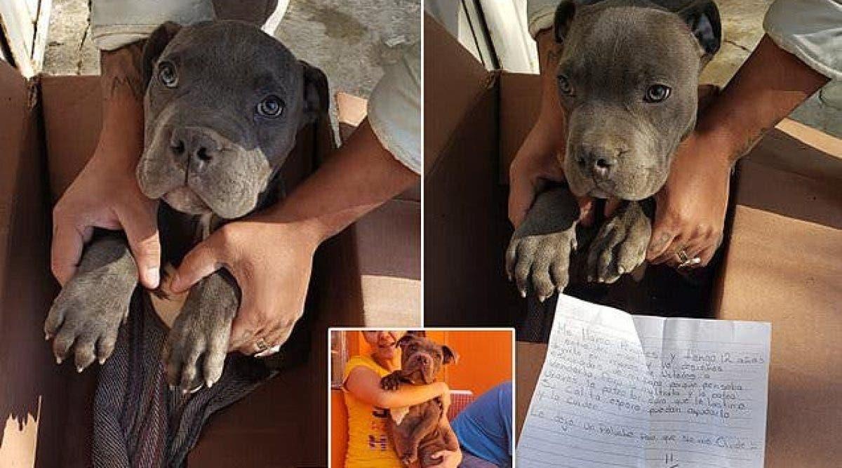 Un garçon laisse son chien adoré à là la porte de la SPA avec une lettre déchirante